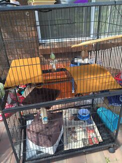 Looking for cage Ambarvale Campbelltown Area Preview