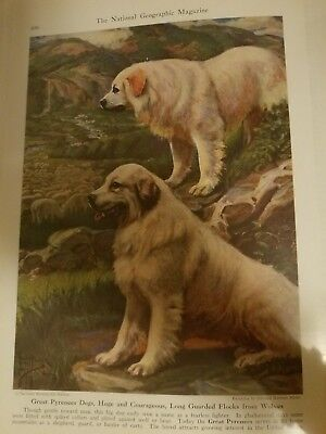 E Miner  GREAT PYRENEES bookplate from 1941 National Geographic Magazine