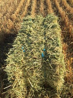 Oaten hay for sale Bute Barunga West Preview
