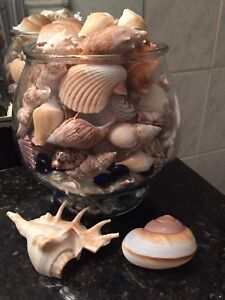 Glass jar of seashells with onyx fish
