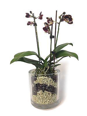 (4,99 € 1 L) Colomi pat. Orchideenboden, jade u. schwarz, 4x 1 Liter Beutel, neu - Schwarz Pat 4