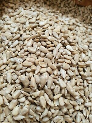 1.5kg Sunflower hearts for wild garden birds