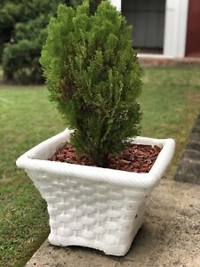 White cement pot with wicker detail