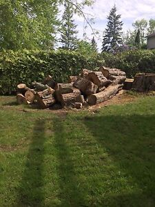 Free Wood - Silver Maple