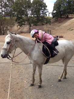 13.3hh welsh pony mare 16yrs Bonogin Gold Coast South Preview