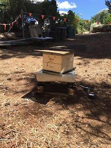 Bee hive new queen beekeeping Highbury Tea Tree Gully Area Preview