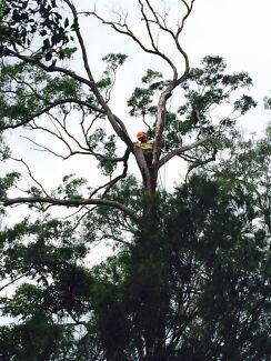 Triple M Tree Lopping Professional Tree Care
