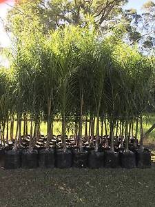 COCOS PALMS SYDNEY - 45L Bags Leppington Camden Area Preview