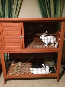 Rabbits 2x Female Reynella Morphett Vale Area Preview