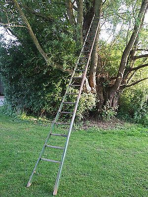 Barn Orchard Tree Arboretum old ladder antique vintage 5.27m