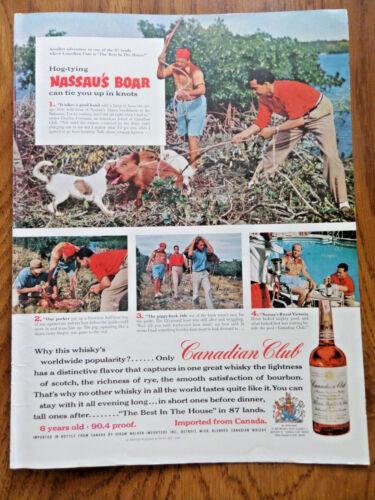 1956 Canadian Club Whiskey Ad Nassau Bahamas Abaco Brushlands Boar Hunting