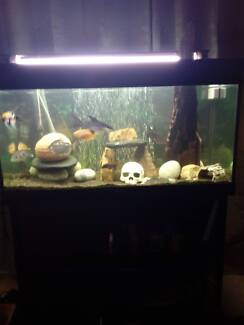 Ready to go 4 1/2 ft fish tank excellent condition