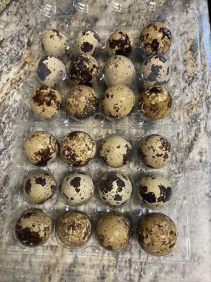 10 Fertile Hatching Eggs Quail Jumbo Pharaoh Eggs