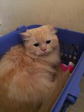Wanted a kitten Hebersham Blacktown Area Preview