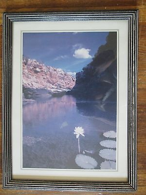 vintage FRAMED COLOR PHOTOGRAPH Water Lillies  Bluffs