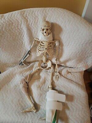 33 Inch Medical Human Anatomical Antomy Skeleton Model Leg Detached