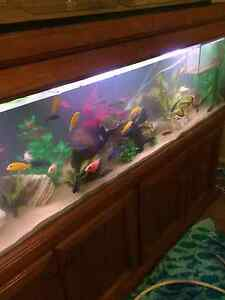 6ft fish tank with all accessories Maryland Newcastle Area Preview