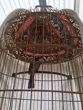 Bulbul bird Prestons Liverpool Area Preview