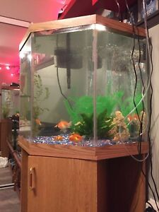 60 gallon corner tank with stand and light
