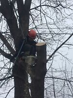 Mike & Mike Professional Tree Solutions (Fully Insured)