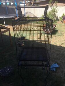 Bird cage with roof perch