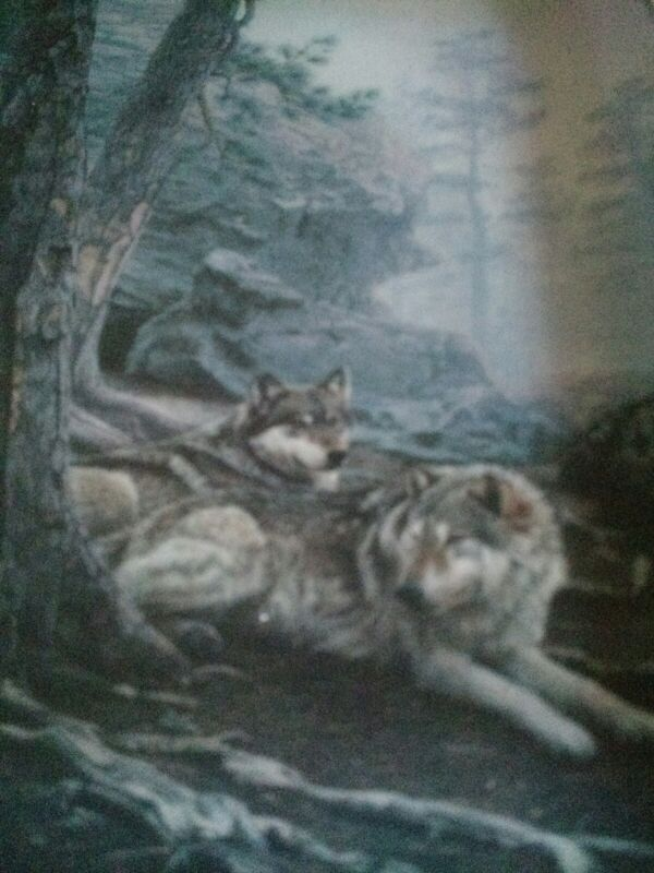 """""""The Wolves Lie Low"""" Nature"""