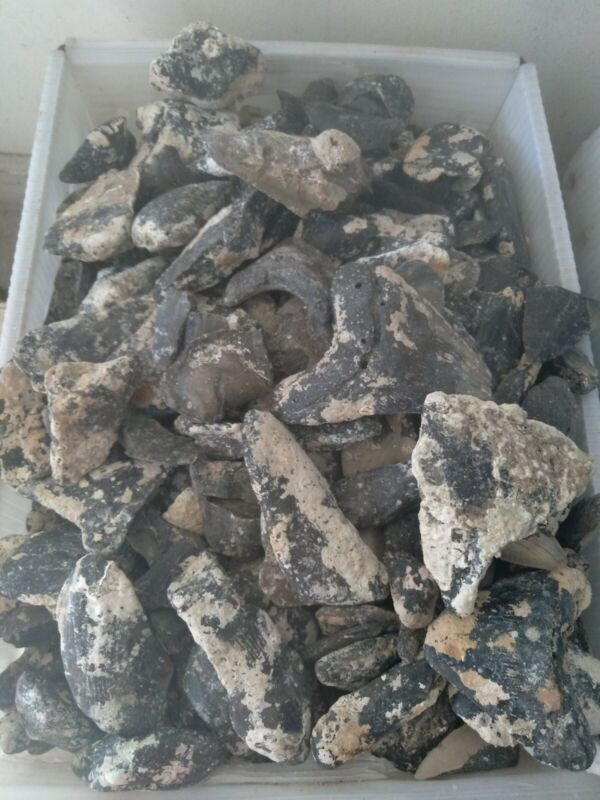 Wholesale lot of 10lbs  Megalodon Shark Tooth Fossil broken piece 100% Authentic