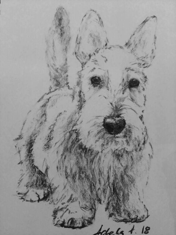 Charcoal+Dog+Drawing+Original+Art+A4+Scottish+Terrier+Pet+Sketch+Portrait