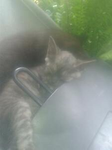 Male and Female Kittens FREE Horseshoe Bend Maitland Area Preview