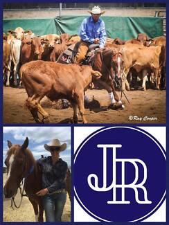 JR Cutting & Performance Horses