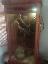Jungle Python and Custom Terrarium Burpengary Caboolture Area Preview