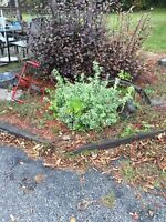 Weed puller plant trimmer  $100.00