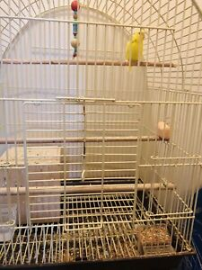 Parakeet for rehoming