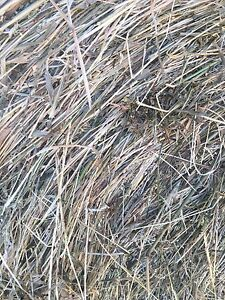 Hay for sale Denman Muswellbrook Area Preview