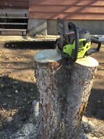 Tree removal/ yard clean up/ tree banding / and landscaping