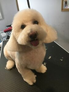 Professional pet groomer - 7  + year experience