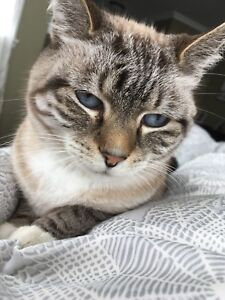 Lost Cat St Philips, Friday Jan 19