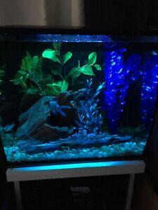 Aquarium fluval flex 15 gallons équiper