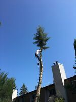 Storm damage tree removal best price