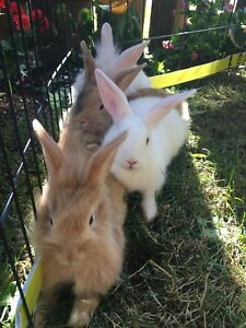 Baby bunnies looking for their new families!