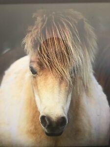 Mini miniature mare Shelbourne Loddon Area Preview