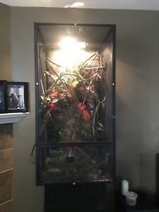 SWEET CHAMELEON SETUP BIG TANK AUTOMATIC MISTER- LOT OF $$ Spent