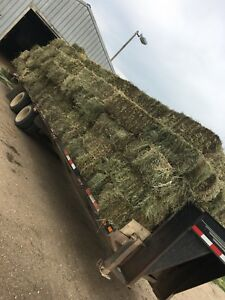 HAY SQUARE BALES FOR SALE