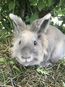 Bunny looking for a good home