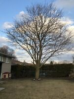 Tree Removal wanted