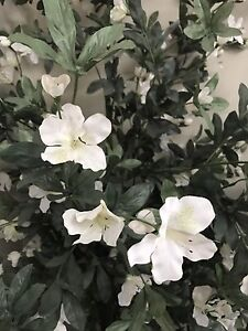 White flowers fake plant for sale