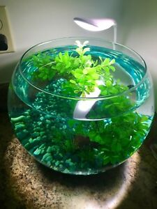 Giant 4g Betta Bowl with Accessories