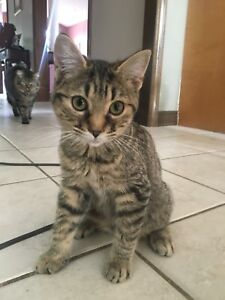 5 Month Old Female Kitten Free to a Good home