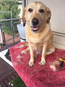 Dog walking and Home wash Carrum Kingston Area Preview