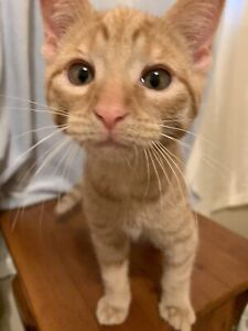 3 month old kittens from PetsNeedLove2 up for adoption